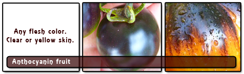 Anthocyanin Fruit