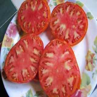 Germaid Red Tomato