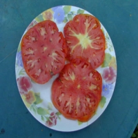 Dr. Wyche's Red Tomato