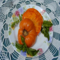 Yellow Belgium Heirloom Tomato