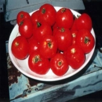 Old Brooks Tomato