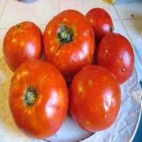 Stone Tomatoes - Whole on a Plate