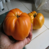 Summer Cider Heirloom Tomatoes - Whole