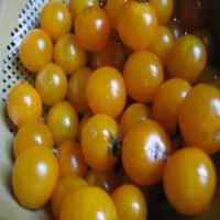 Southport Tomatoes - Whole in a Colander