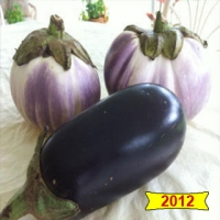 Violette Longue Hative Heirloom Eggplant