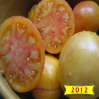 White Oxheart Heirloom Tomato