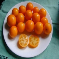Tommy Toe Yellow Cherry Tomatoes on a Plate, Whole and Sliced
